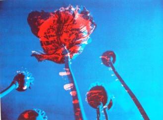 Poppies II,red in blue sky