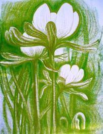 Aconites Green