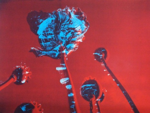 Poppies II Blue in Red Sky Sold