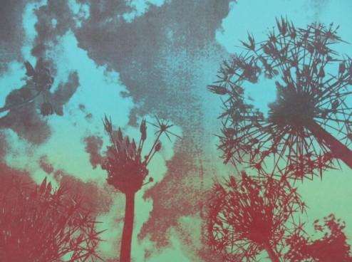 Alliums cool Screen print