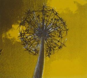 Allium yellow. Screen print