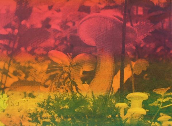 Askrigg fungi (large print SOLD small still available)